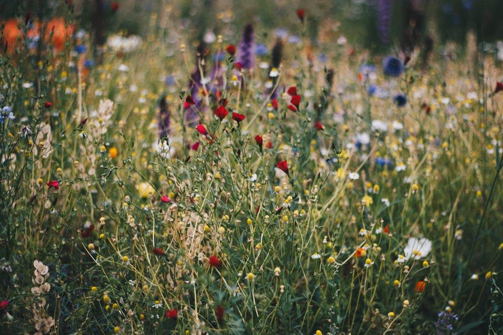 maaibeleid-bloemen-gemeente